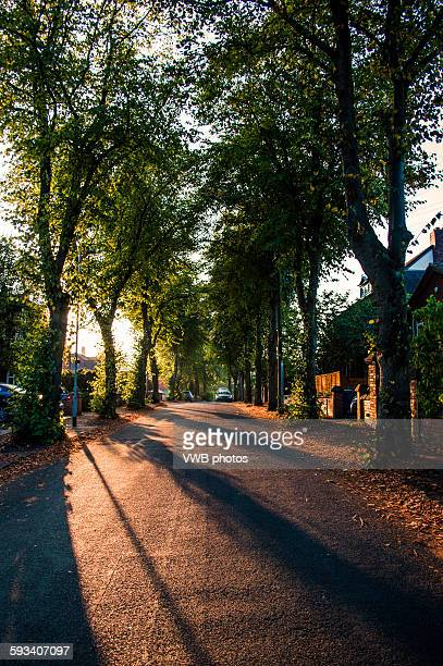 Avenue of lime trees at dawn