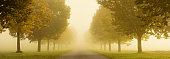 treelined road shrouded in fog