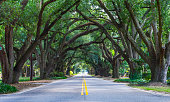 """South Boundary is also known as the """"Avenue of Oaks"""" because of the beautiful live oaks that line the street making almost a canopy above the street."""