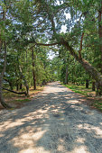 Avenue of pines of Amanohashidate in Kyoto, Japan