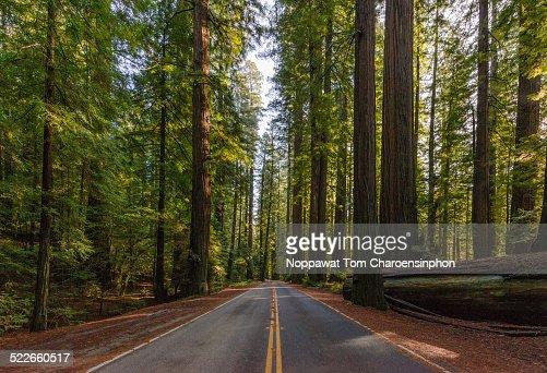 Avenue of the Giants California