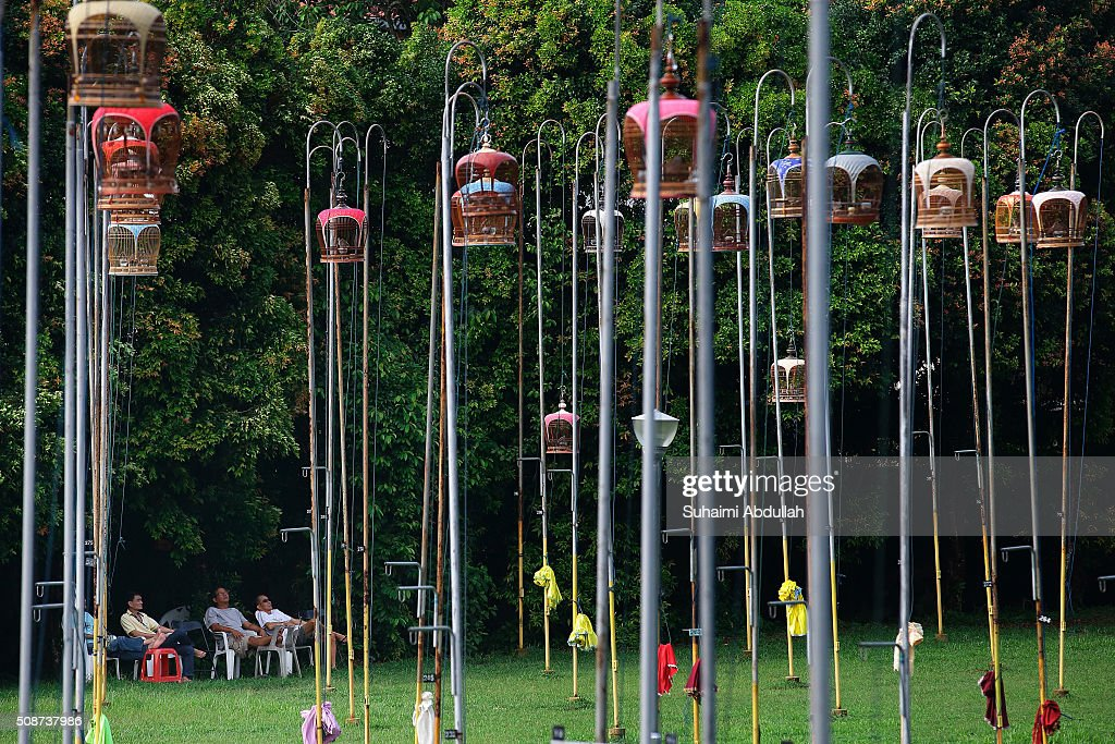Avian lovers gather and relax as they listen to the birds singing housed in an ornately decorated cages hoisted on a pole at a bird singing corner on February 6, 2016 in Singapore.