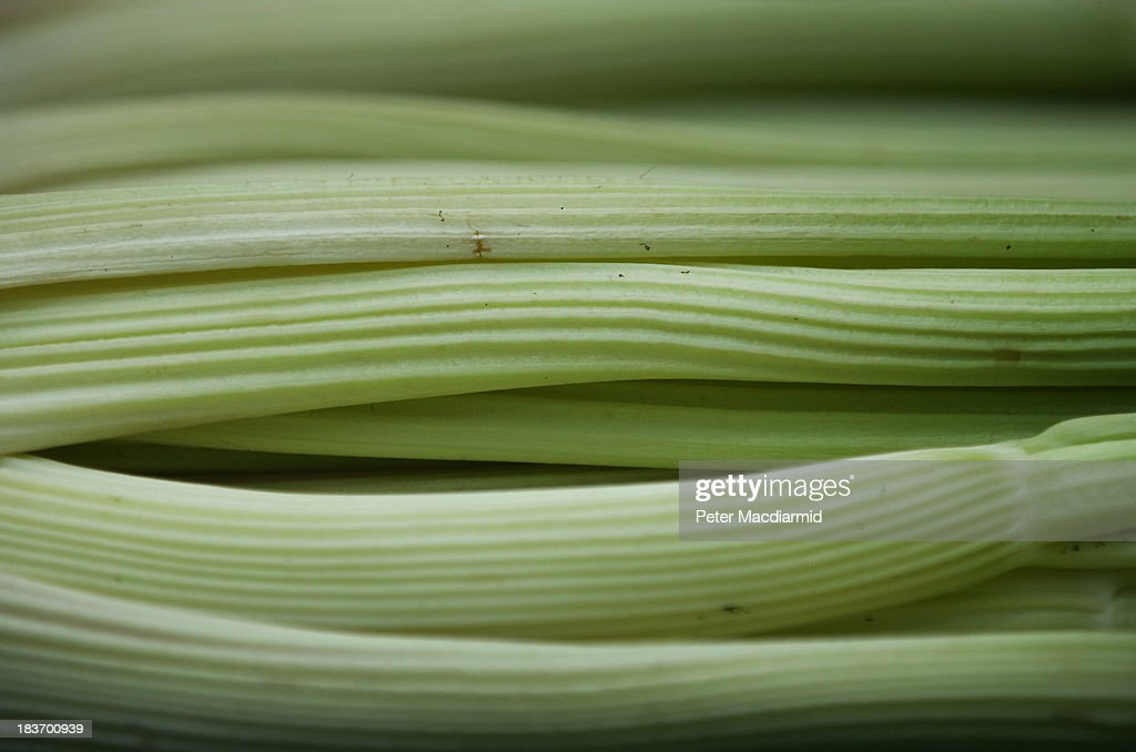 Award winning celery is displayed at the Royal Horticultural Society Harvest Festival Show on October 9 2013 in London England The nation's...