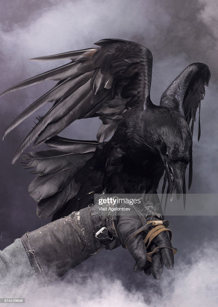 Awesome black raven