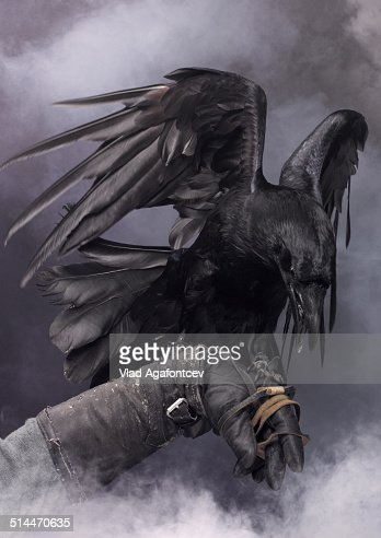 Awesome black raven