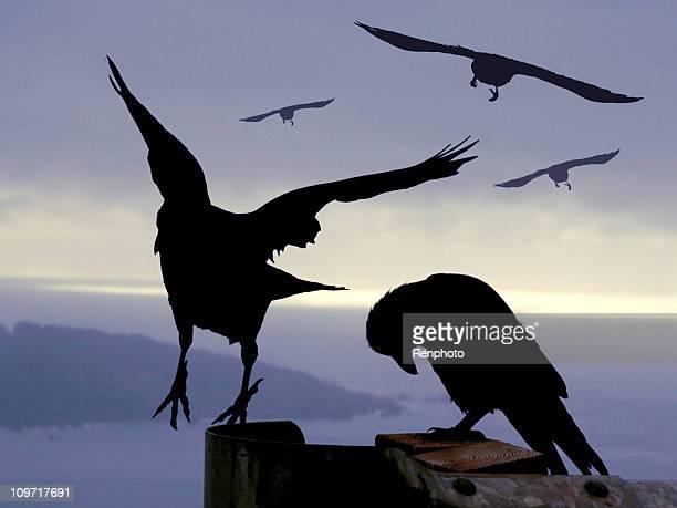 Awesome Crows-blauen Hintergrund