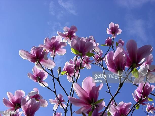Awesome Magnolias