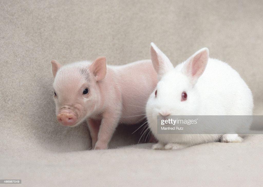 Awkward Pet Portraits : Stock Photo