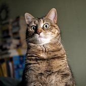 Awkward Pet Portraits