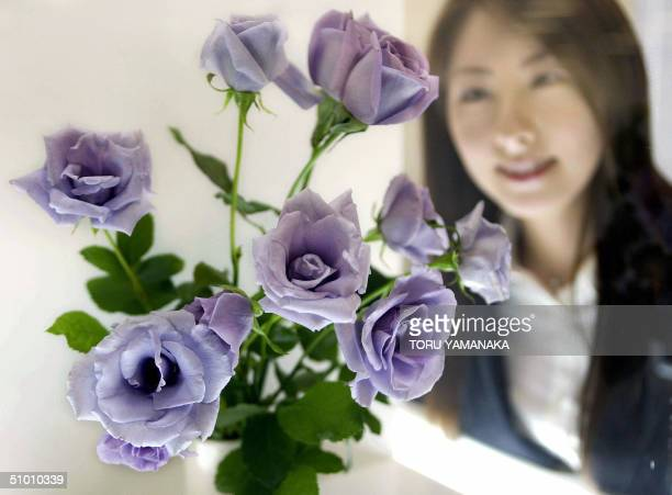 Aya Kato campaign girl for Japanese brewer Suntory admires the world's first 'blue rose' developed by the company during a press conference in Tokyo...