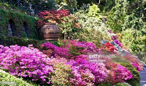 Azalea y rododendro en un jardín Formal. Imagen de Color