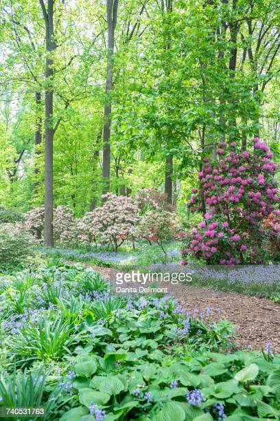 Azalea Woods, Winterthur, Delaware, USA