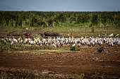 Baboons, Hippos and White Storks
