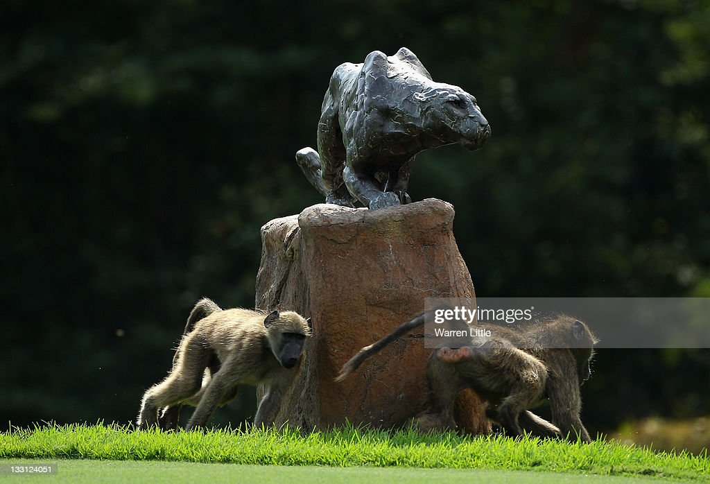 Baboons runs around a statue of a Leopard during the first round of the Alfred Dunhill Championships at Leopard Creek Golf Club on November 17, 2011 in Malelane, South Africa.