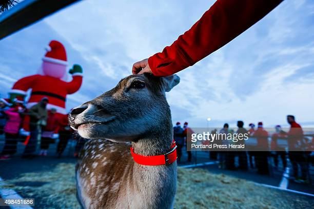 Baby a European fallow deer gets a scratch on the head Sunday before the running of the annual Santa Hustle Half Marathon and 5K at the Maine Mall