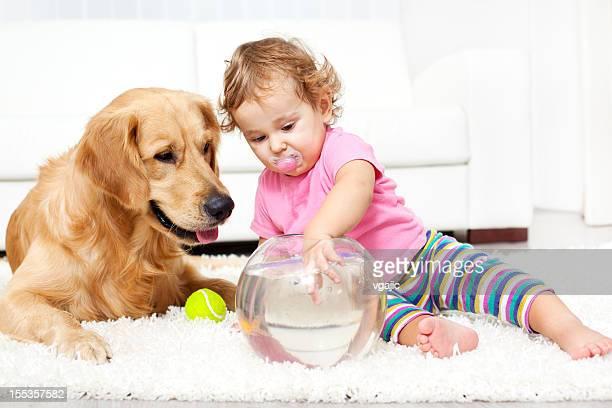 Bebê e cão captura um Peixe dourado