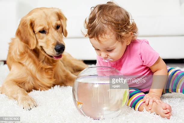 Baby And Dog Catching Goldfish