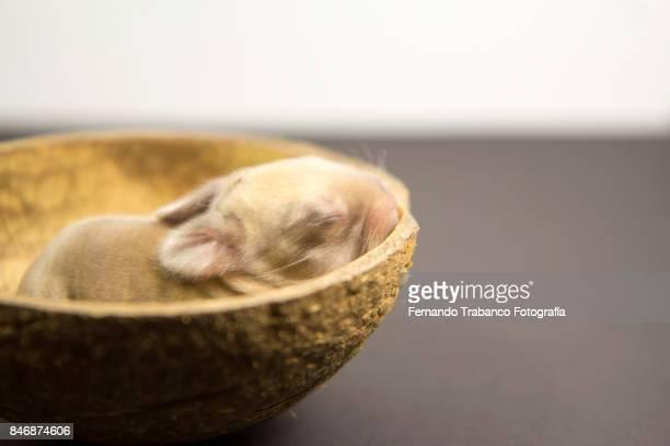 Baby animal inside a nest