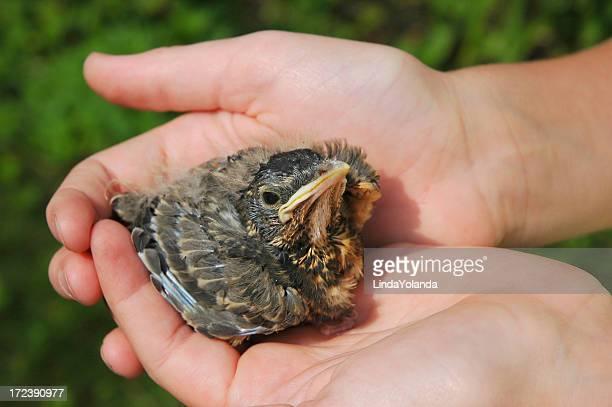 ベビーの鳥