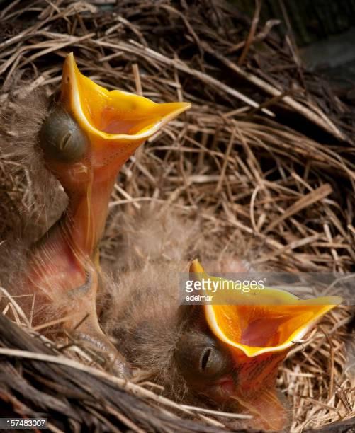 ベビー鳥がディナー