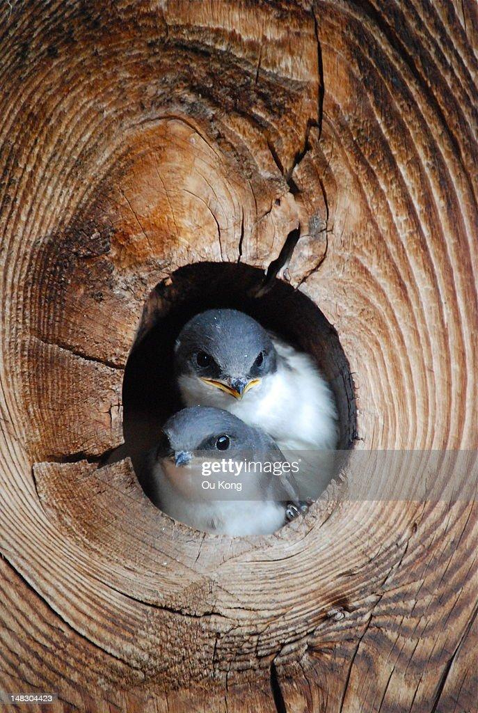 Baby birds : Stock Photo