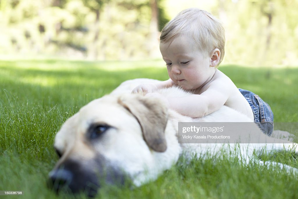 Baby boy climbing on his resting gentle dog. : Stock Photo