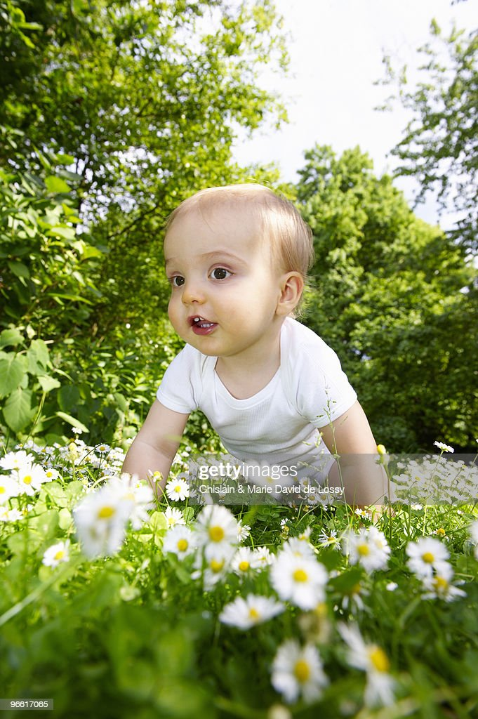 Baby boy in the daisies : Stock Photo