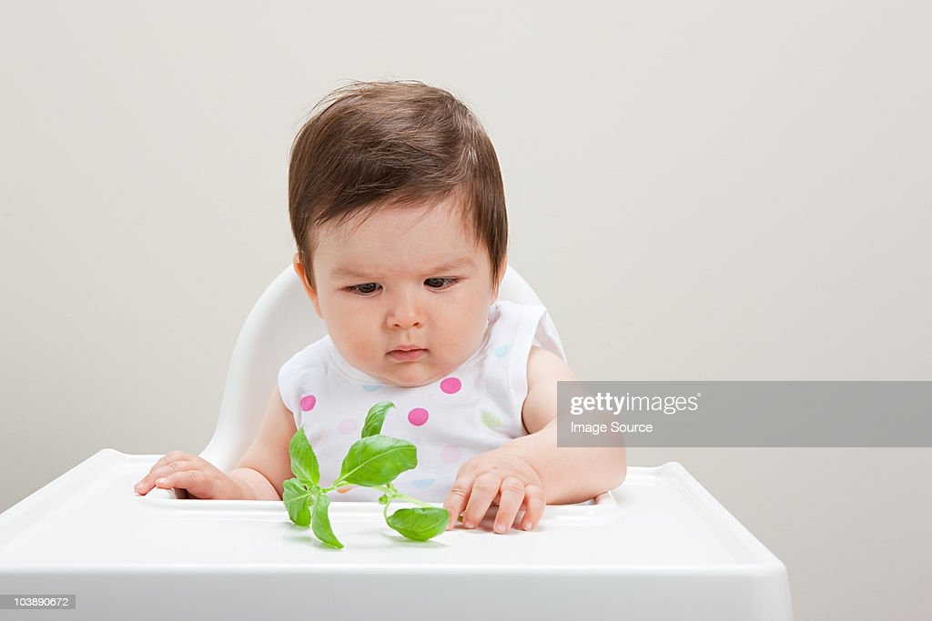 Baby boy looking at basil leaf : Stock Photo