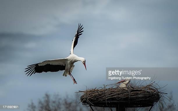 Baby bringing storks