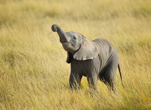 how to eat an elephant image