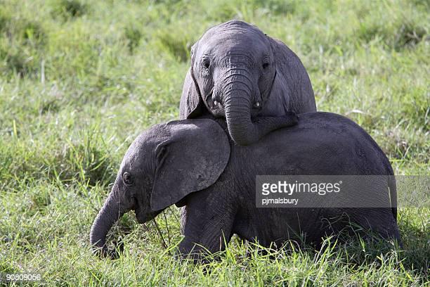 Baby-Elefanten im Spiel