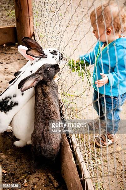 Baby feeding rabbits