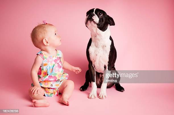 Bambino ragazza e Boston Terrier seduto su sfondo rosa