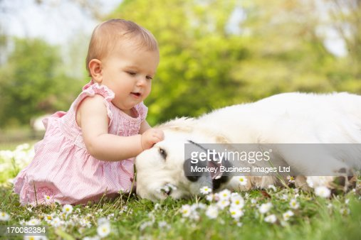 Baby Girl In Summer Dress Sitting In Field Petting Family Dog : Stock Photo