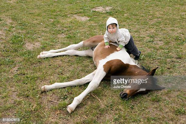 Baby girl lying on horse and looking at camera