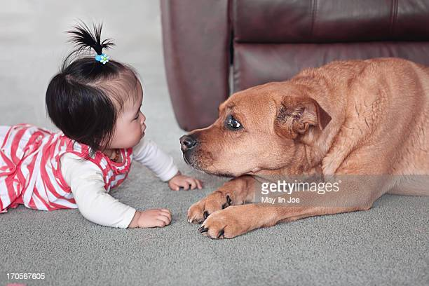 Baby girl on floor with gentle big pet dog