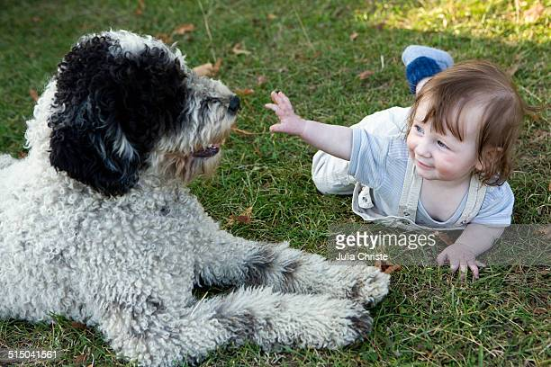 Baby girl playing with Portuguese Water Dog