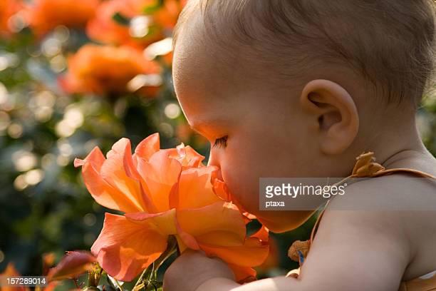 Baby Mädchen riechen-rose
