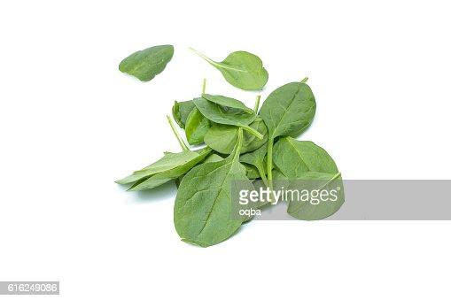Baby green spinach : Foto de stock