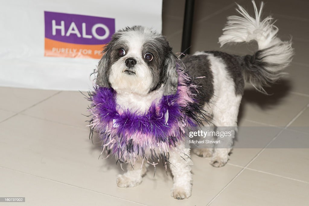 Baby Hope attends the TLC's 'Cake Boss' Baby Hope's Most Expensive Pet Wedding in History benefiting the Humane Society episode viewing at Maserati Showroom on February 4, 2013 in New York City.
