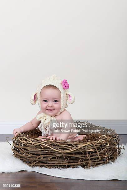 Baby Lamb in a Nest