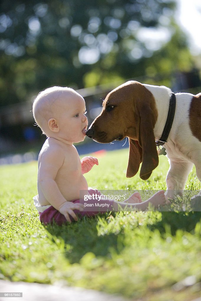 Baby licking dog's nose : Stock Photo