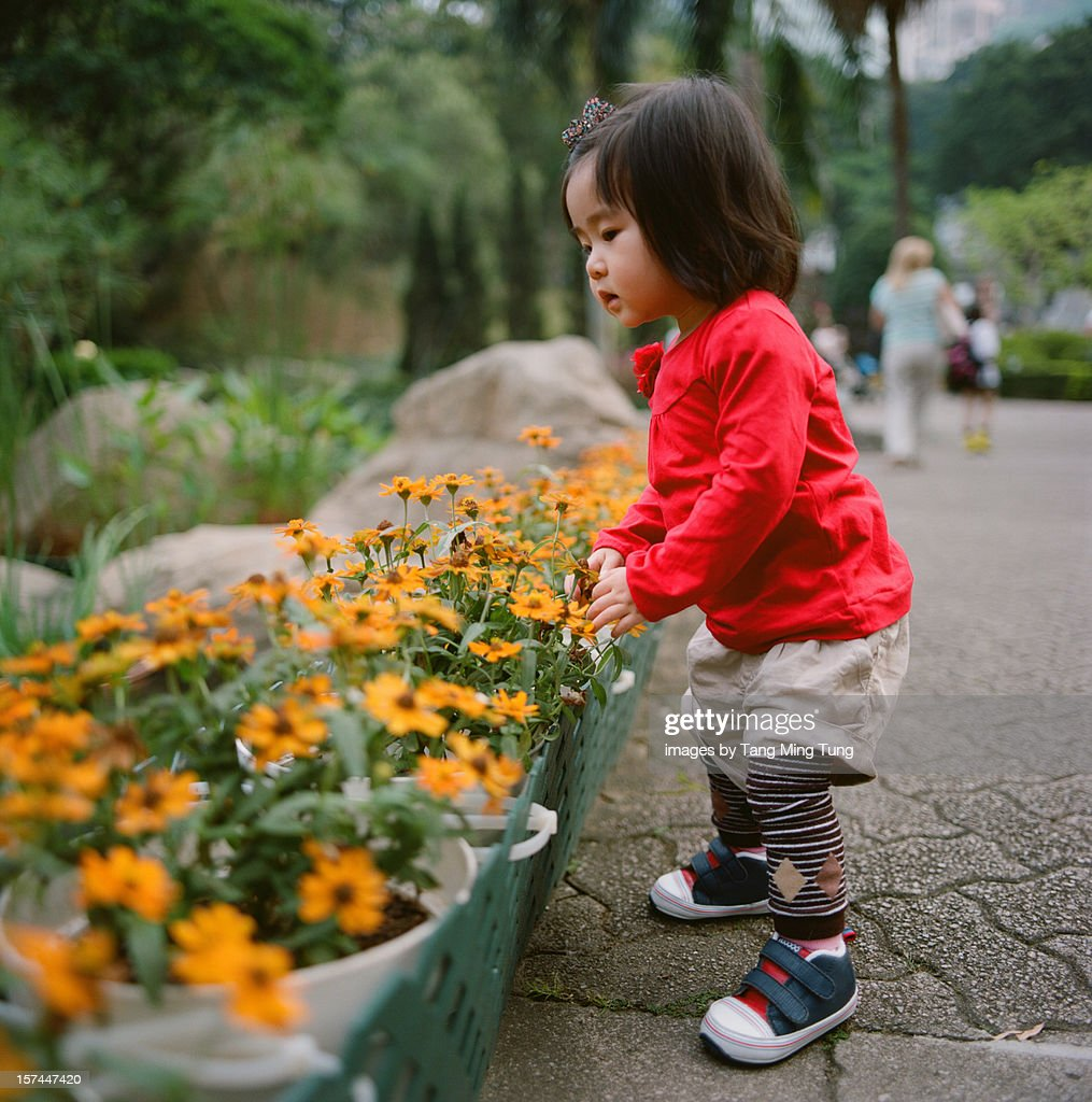Baby looking at flowers curiously in the park : Stock Photo