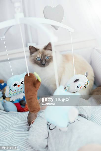 Baby lying in crib with cat looking at cuddly toys
