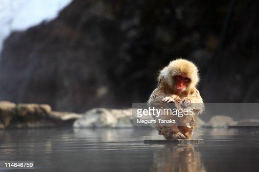 Baby monkey Bath In hot springs