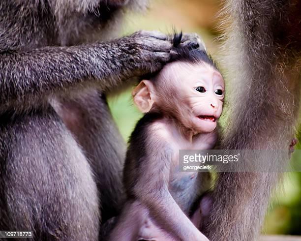 Bambino di scimmia Toelettatura di animali