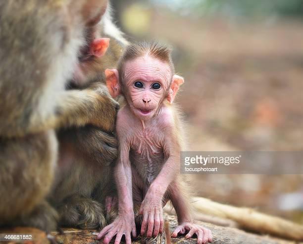 Baby monkey looking at camera