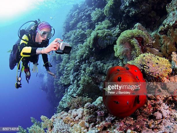 Baby nemo clownfish and underwater photographer