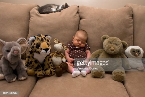 Baby Pussy Stock Photos And Pictures Getty Images