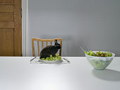 Baby Rabbit Climb Standing on Salad at Table